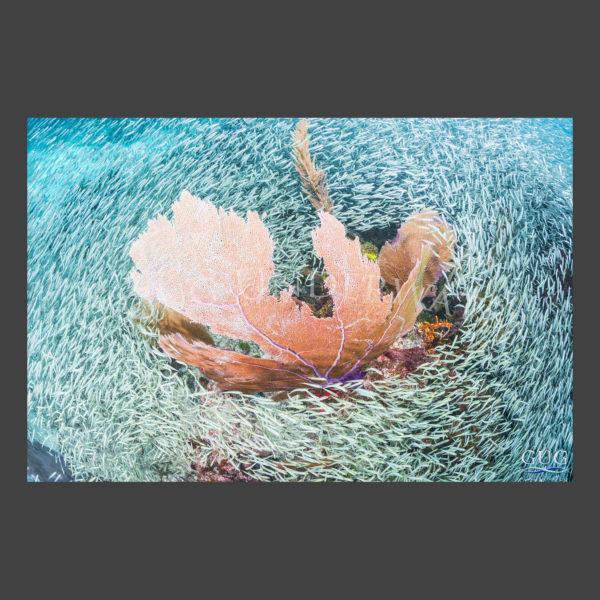 Reefdance